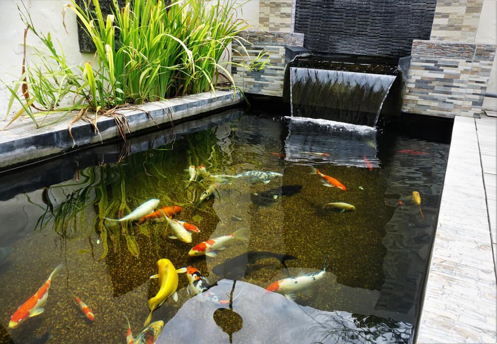 bassin avec poisson